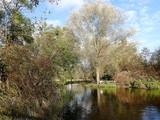 River Colne, Munden Estate, Watford, Hertfordshire
