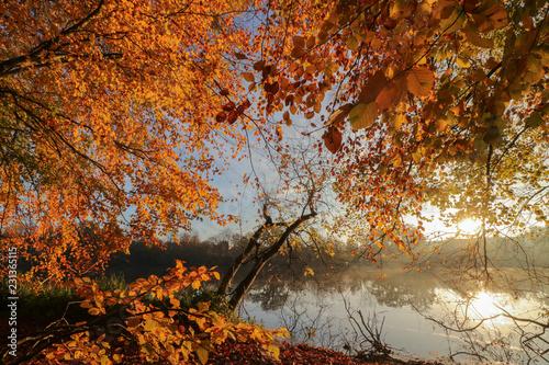 Leinwandbild Motiv romantische Herbst Landschaft, buntes Herbstlaub im Wald