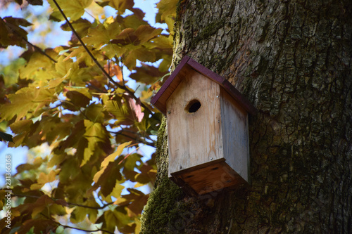 uninhabited birdhouse on a tree macro shot, handmade wooden birdhouse attached to a maple tree for bird protection
