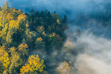 Morning mists and colorful autumn forest landscape in the mountains - 231396159