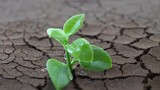 A tree growing on cracked ground. Crack dried soil in drought, Affected of global warming made climate change. Water shortage and drought concept. - 231410184