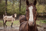 Portrait of a brown horse, with different horses background. - 231414396
