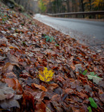 road in the woods - 231416990