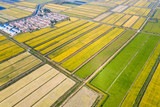 paddy field in autumn - 231436311