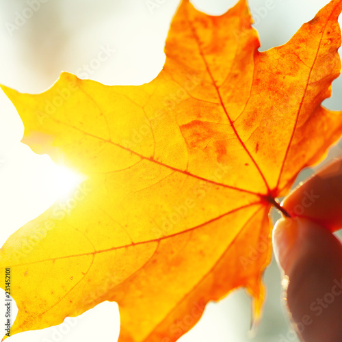 Autumn background with leaves - 231452101