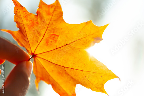 Autumn background with leaves - 231452102