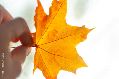 Autumn background with leaves - 231452106