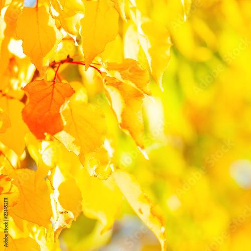 Autumn background with leaves - 231452111