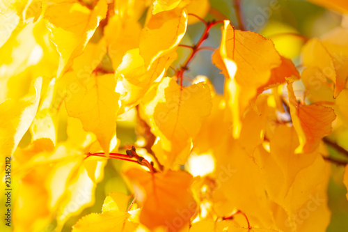 Autumn background with leaves - 231452112