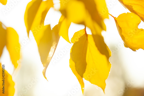 Autumn background with leaves - 231452121