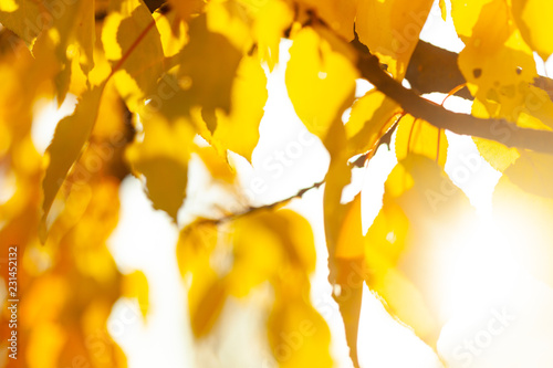 Autumn background with leaves - 231452132