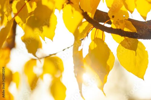 Autumn background with leaves - 231452134