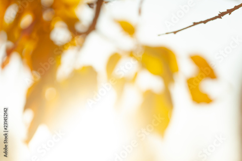 Autumn background with leaves - 231452142
