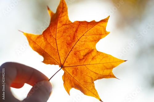 Autumn leaves background - 231452155