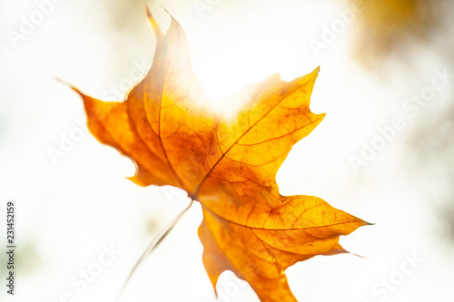 Autumn leaves background - 231452159