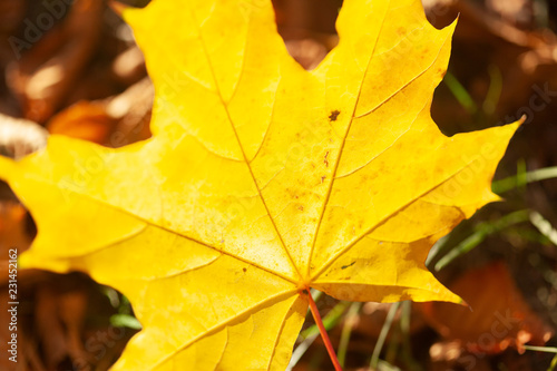 Autumn leaves background - 231452162