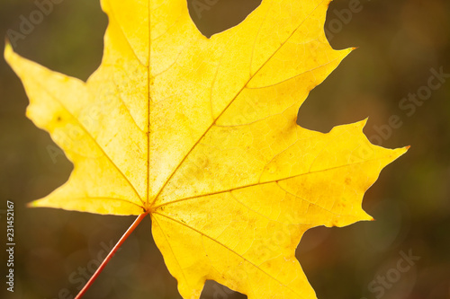 Autumn leaves background - 231452167