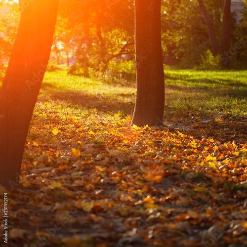 Autumn leaves background - 231452174