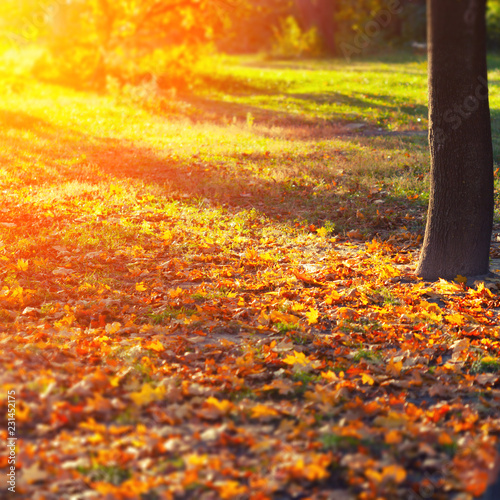 Autumn leaves background - 231452175