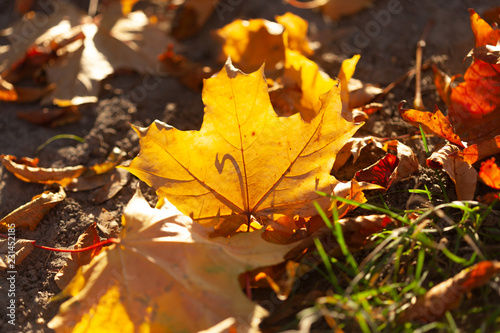 Autumn leaves background - 231452185
