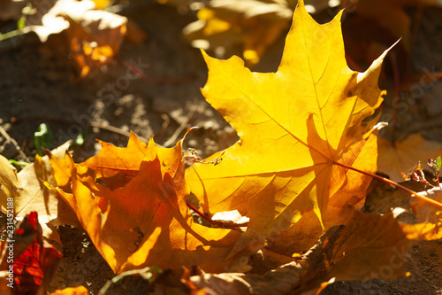 Autumn leaves background - 231452188