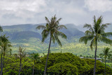 Lush landscape in Maui - Hawaii