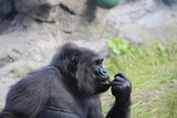 What animals are kept in the zoo and not only. Wildlife zoos wild forest. - 231470322