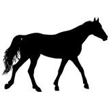 Animal silhouette of black mustang horse illustration - 231476514