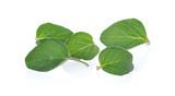 oregano leaves on white background - 231492958