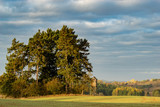 hunting tower at the edge of the forest in autumn scenery - 231513757