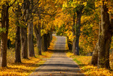 Autumn landscape road with colorful trees . Bright and vivid autumn foliage with country road - 231513998