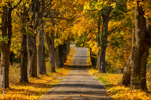 Autumn landscape road with colorful trees . Bright and vivid autumn foliage with country road