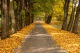 Autumn landscape road with colorful trees . Bright and vivid autumn foliage with country road - 231514506
