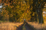 Autumn landscape road with colorful trees . Bright and vivid autumn foliage with country road - 231514953