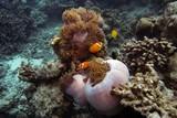 Nemo - 231515953