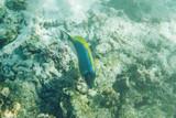 Corals reef - 231521904
