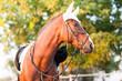 Leinwandbild Motiv Horse head in the setting sun. Horse theme