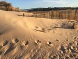 Wydma , piasek, plaża. - 231541146