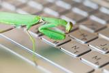 Mantis pressing keys on laptop keyboard - 231553308