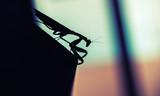 Mantis. Black insect silhouette, macro - 231553325