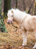 A small horse stands on the street near a tree. - 231553903