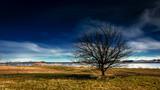 einsamer Baum - 231555177