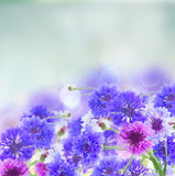 Posy of blue and pink cornflowers on blue abstract background