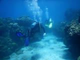 Scuba Diving - 231579506