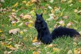 Friendly Squirrel - 231593927