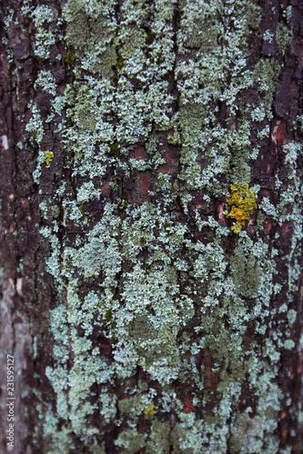 Wooden moss texture - 231595127