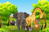 Fototapeta Fototapety na ścianę do pokoju dziecięcego - WIld animal in nature © blueringmedia
