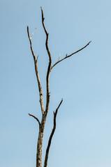 Bird rest at dried tree