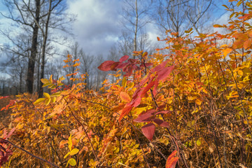 Bright colors of autumn nature, the last leaves