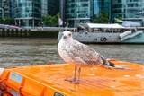 Bootsfahrt auf der Themse, verglaste Wolkenkratzer und Luxusjacht im Vordergrund posiert eine Möwe - 231652924